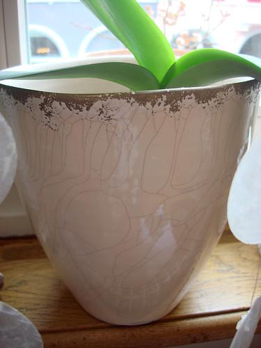 Orchideen-Übertopf von Interio