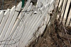 garden fence 032