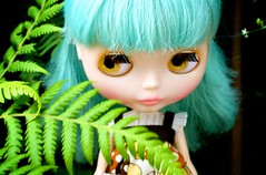 Jem laying low in the ferns ...
