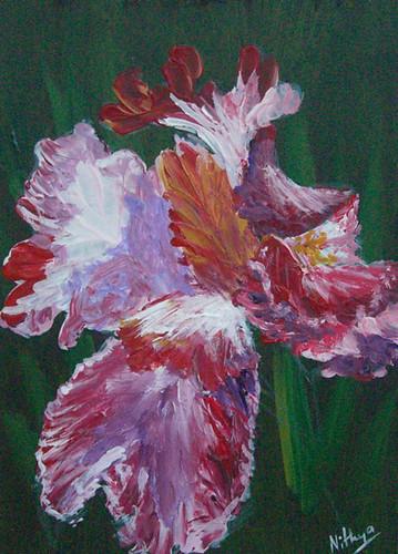 Iris #24