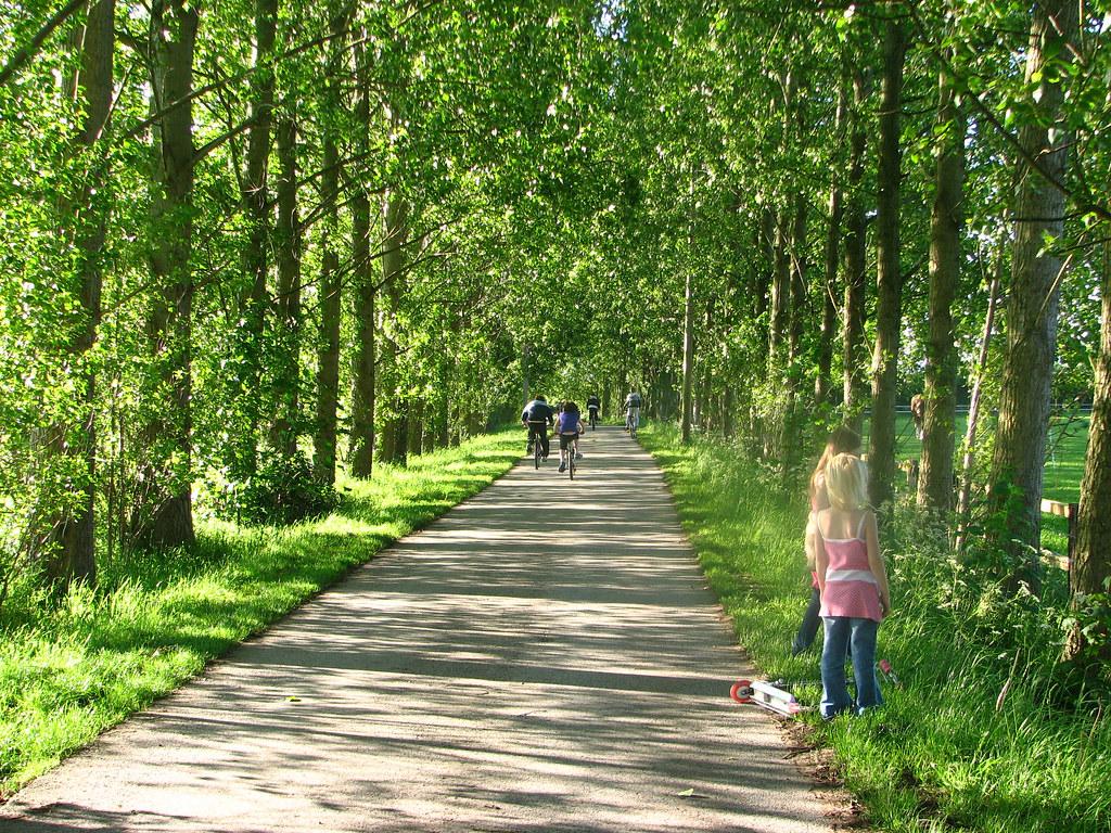 Leafy Avenue (Moss Lane)