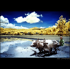 A Piece Of Morning#4 (yoga - photowork) Tags: morning panorama cloud mountains reflection tree nature lens landscape ir photography wideangle v3 canon350d infrared farmer 1022mm landscapephotography beautifulmorning morningactivity trasognoerealtà beautifulindonesia visitindonesia