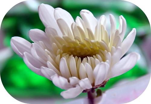 Tinting flowers