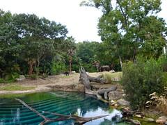 African elephant (PidginPea) Tags: africa baby wdw waltdisneyworld animalkingdom tsavo africanelephant kilimanjarosafaris harambewildlifereserve monkeypoint