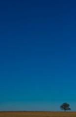 EXTREME MINIMALISM (Darren Speak) Tags: blue sky tree fence extreme minimalism