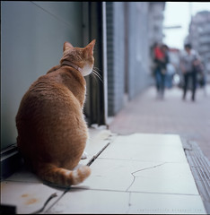 I became a cat looking at another cat (Steve only) Tags: cats 120 6x6 tlr film rolleiflex mediumformat square kodak snaps pro format 35 mx 160 xenar f35 schneiderkreuznach 75mm 7535 catseverywhere canon8800f ektarcolor