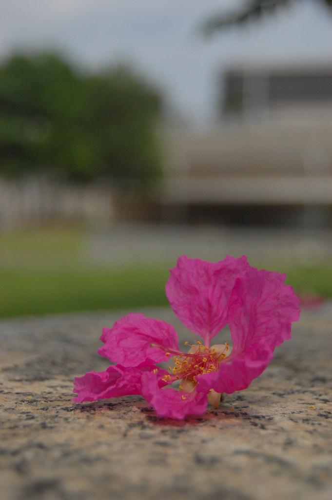 花开。花谢