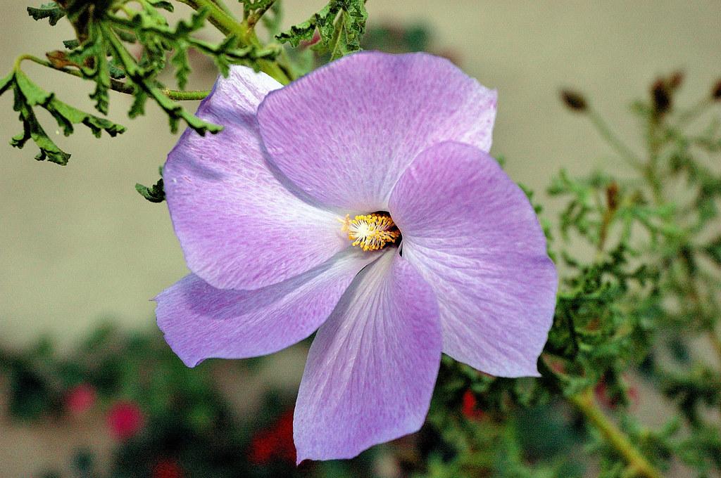 Purple Flower - D70s 18-70 0038