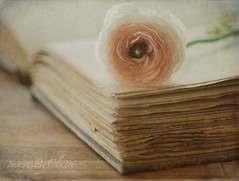 Tatters & ruffles (ImagesByClaire) Tags: pink vintage petals dof shakespeare ranunculus depthoffield worn oldbook project365 explored paintingwithbrushes skeletalmess combinationoftextures storybookwinner tatteredpages