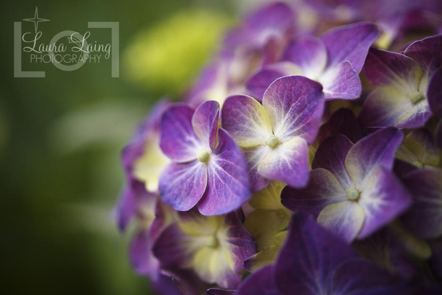 flowers004