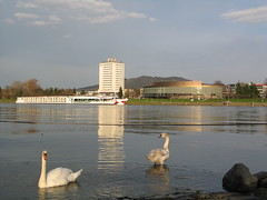 Linz at the Danube - Upper Austria (Been Around) Tags: water animal animals river linz hotel austria march österreich europa europe niceshot travellers eu swans duna schwan danube oberösterreich märz autriche austrian 2010 donau aut schwäne oö ö upperaustria brucknerhaus urfahr arcotel 5photosaday a antonbruckner linz09 onlyyourbestshots linzanderdonau hauteautriche donauradwanderweg concordians thisphotorocks kulturhauptstadt2009 worldtrekker visipix expressyourselfaward flickrunitedaward bauimage märz2010 linzatthedanube capitalofupperaustria arcotelnike hotelarcotelnike