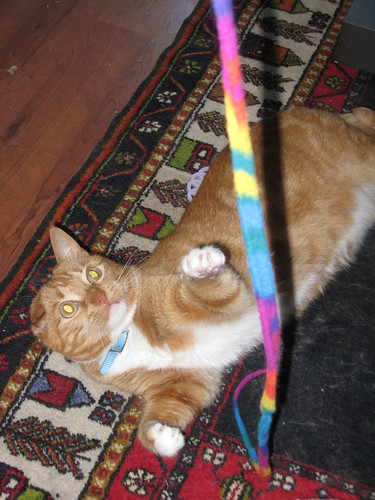 Basil loves playing with his string!