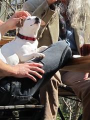 Scritch, scritch (jnoc) Tags: dog dogs montague montagueplains