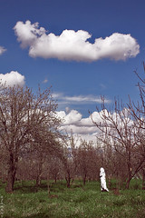 Guardian White (seyed mostafa zamani) Tags: life camera blue cloud white tree art nature beautiful night canon garden landscape real hope spring asia iran surrealism arts dream meadow human dreams reality iranian reconciliation impression guardian      azarbayjan   eos450d 450d marand        natvryalyst