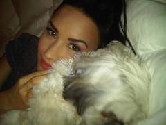 Demi Lovato and her pet, Bella. (You're my favourite song <3) Tags: dog mobile snuggle blackberry picture joe demi bella jonas lovato jemi