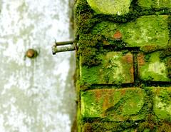 Green Manalishi (ewitsoe) Tags: seattle urban washington moss nikon rust barrels georgetown abandonded lonely crusty chemical abrasion dekay forgotton d80