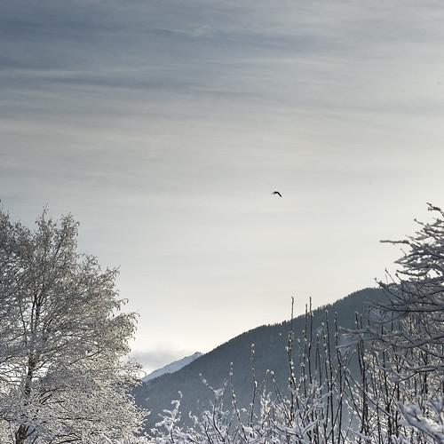 ancora neve - fa un freddo becco