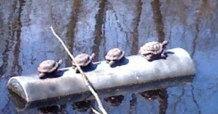 turtlebayou2