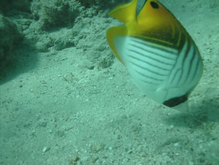 snorkeling7