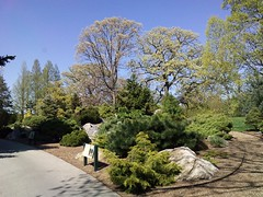 Spring Green (andyXchrist) Tags: nature spring outdoor bronx nybg conifer springgreen zn5