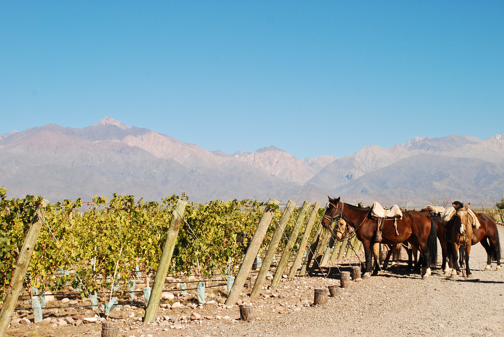 Wine Camp at The Vines of Mendoza Estate