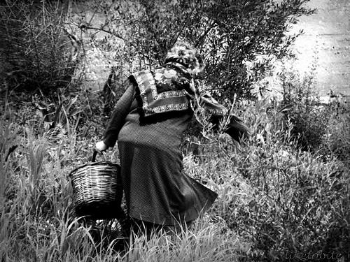 farmer's work