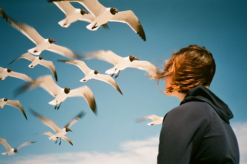 Girl and Gulls