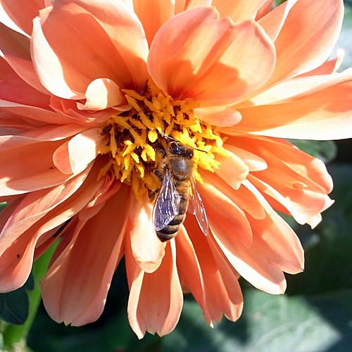 Bee 1of2