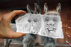 Pencil Vs Camera - 12 (Ben Heine) Tags: ranch new friends cute art nature smile sunglasses animal tongue composition hair fur happy countryside sketch 3d crazy nikon funny couple flickr humorous foto friendship belgium d70 duo creative donkey excited explore together laugh series why 12 awards mad conceptual 2d interview frontpage campagne sourire opticalillusion fou langue fourrure laurelhardy hears showbiz tekening pourquoi number12 âne miseenabyme heureux condition oreilles theartistery mywinners benheine braives drawingvsphotography traditionalvsdigital flickrunited flickrunitedaward simoncrisp pencilvscamera theartisterycom newslitetv
