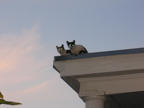 Roof Cats