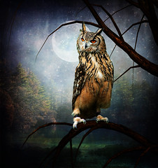Hunting Ground (violscraper) Tags: moon tree night forest owl stockyard soulscapes psiloveyou exploreworthy pareeerica digitalresonance magicartoftextures artistictreasurechest empyreanfantasies joessistah phatpuppy theknightandhisprincess artuniinternational
