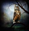 Hunting Ground (violscraper) Tags: moon tree night forest owl stockyard soulscapes psiloveyou exploreworthy pareeerica digitalresonance magicartoftextures artistictreasurechest empyreanfantasies joessistah phatpuppy theknightandhisprincess artuniinternational