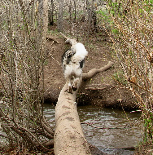 Heading across the stream on a log