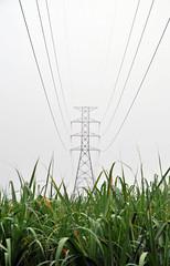 cane_field_pylon