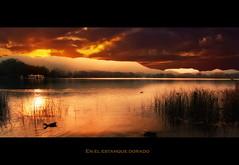 En el estanque dorado (Jose Luis Mieza Photography) Tags: spain catalonia girona catalunya cataluña banyoles benquerencia reinante pladelestany jlmieza reinanteelpintordefuego wonderworldgallery joseluismieza
