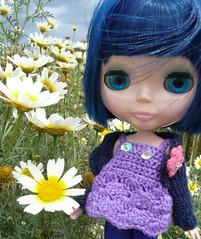 Spanish daisies!