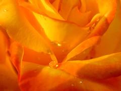 . . o O o o . . . (...anna christina...) Tags: brazil plant minasgerais nature brasil plantas natureza serradamantiqueira mataatlntica annachristina annachristinaoliveira