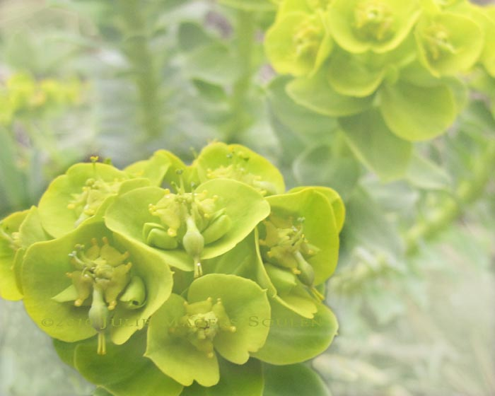 An exotic yellow green succulent flower.