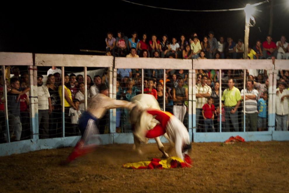 Uno de los hermanos Ledesma  y otros Toreros intentan  hacer caer al toro al suelo para poder dominarlo.  (15 de Agosto, Paraguay - Tetsu Espósito)