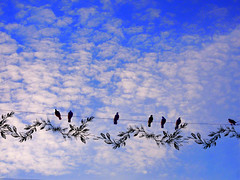 birds on the line birdhouse 3