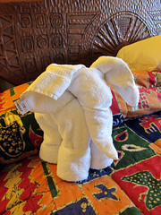 elephant towel art at animal kingdom lodge