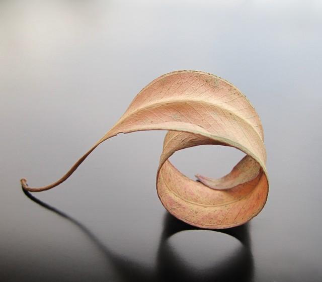 "R-A-D #133 5/18/2010 ""Fallen Leaf"""