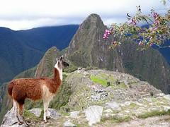 Machu Picchu, postal