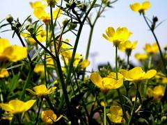 (.gennamariie.) Tags: lancaster floweres