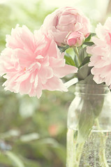 Happy Thursday (KimFearheiley) Tags: pink peony