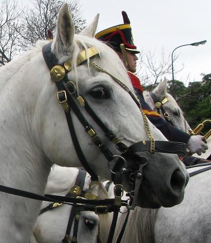 caballos y jinetes