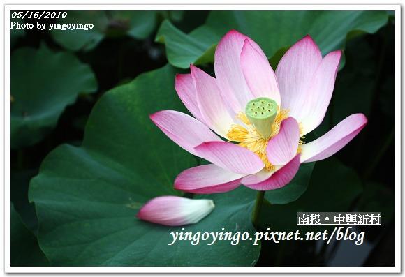中興新村99年蓮花I2159