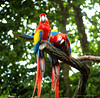 Parrot (.S.Y.I.B.L.I.) Tags: bird nature fauna flora couple colorful parrot burung kakaktua syibli
