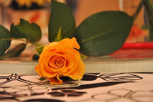 rose (100)