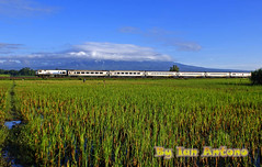 Gajayana Express and Mount Wilis.................. (Ian Antono-CC20327) Tags: indonesia trains kras eastjava tulungagung keretaapi gec18mmi ka32gajayana wilissmountain cc20406